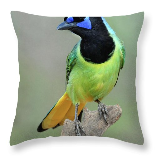 Green Jay Throw Pillow featuring the photograph Green Jay by Dave Mills