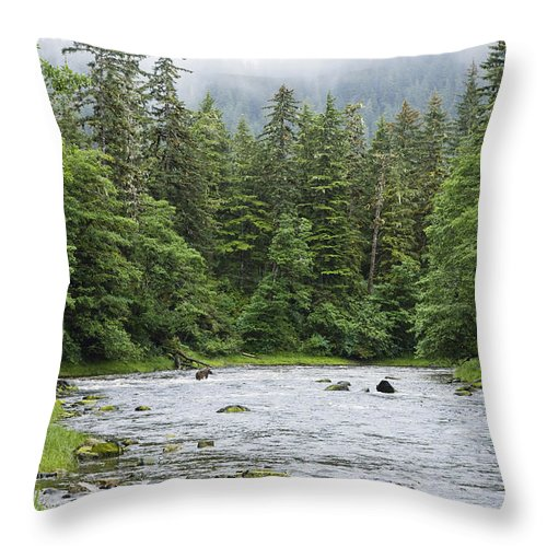 Mp Throw Pillow featuring the photograph Grizzly Bear Ursus Arctos Horribilis by Konrad Wothe