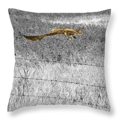 Al Bourassa Throw Pillow featuring the photograph Hawk Duo by Al Bourassa
