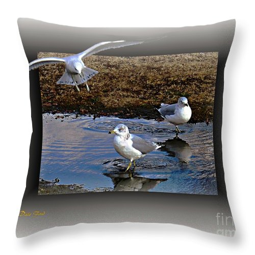 Seagull Throw Pillow featuring the digital art Heads Up by Dale  Ford