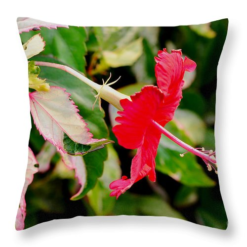 Hibiscus Throw Pillow featuring the photograph Hibiscus In Bloom by Pravine Chester