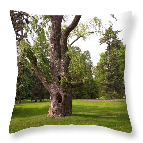 Tree Throw Pillow featuring the photograph Knurled Tree by Corinne Elizabeth Cowherd