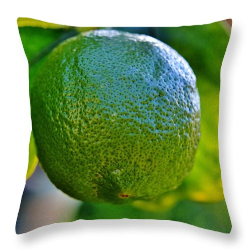 Plant; Macro; Leafs; Garden; Green; Tree; Citrus; Fruit; Background; Autum; Yellow; Decorative; Sour; Lemon; Fresh; Throw Pillow featuring the photograph Lemon On Tree by Werner Lehmann