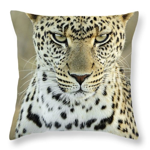 Fn Throw Pillow featuring the photograph Leopard Panthera Pardus Female by Martin Van Lokven