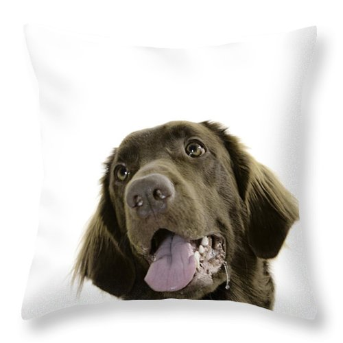 Pet Throw Pillow featuring the photograph Lilly by Angel Ciesniarska