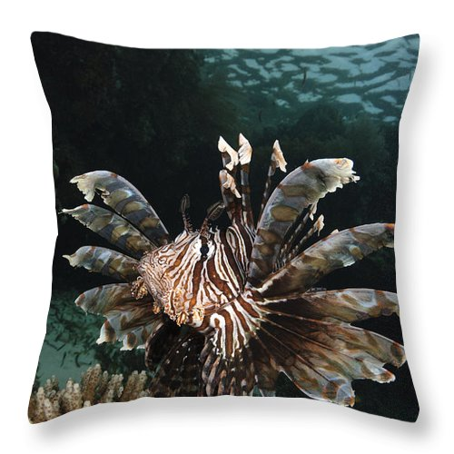 Lionfish Throw Pillow featuring the photograph Lionfish, Indonesia by Todd Winner