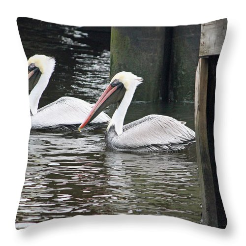 Pelican Throw Pillow featuring the photograph Looking For Dinner by Suzanne Gaff