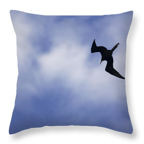 Photography Throw Pillow featuring the photograph Magnificent Frigatebird In Flight by Tim Laman