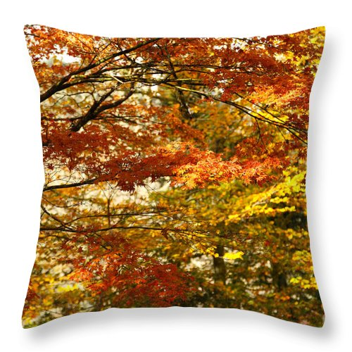 Maple Throw Pillow featuring the photograph Maple Tree Foliage by Gaspar Avila