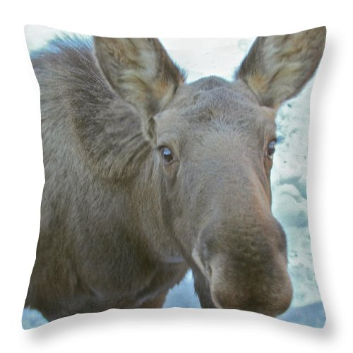 Moose Throw Pillow featuring the photograph Nosey by Rick Monyahan