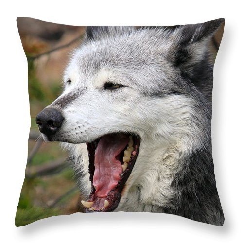 Wolf Throw Pillow featuring the photograph Open Wide by Steve McKinzie