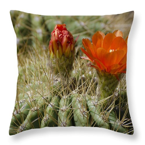 Cactus Throw Pillow featuring the photograph Orange Cactus Flower by Jim And Emily Bush
