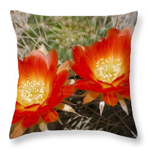 Cactus Throw Pillow featuring the photograph Orange Cactus Flowers by Jim And Emily Bush