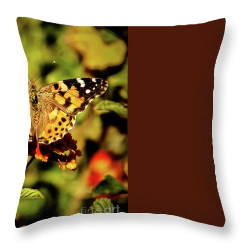 Butterfly Throw Pillow featuring the photograph Painted Lady by Robert Bales