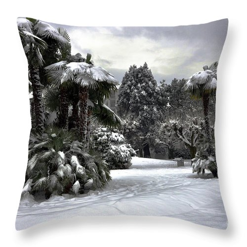 Palm Throw Pillow featuring the photograph Palm Trees With Snow by Mats Silvan