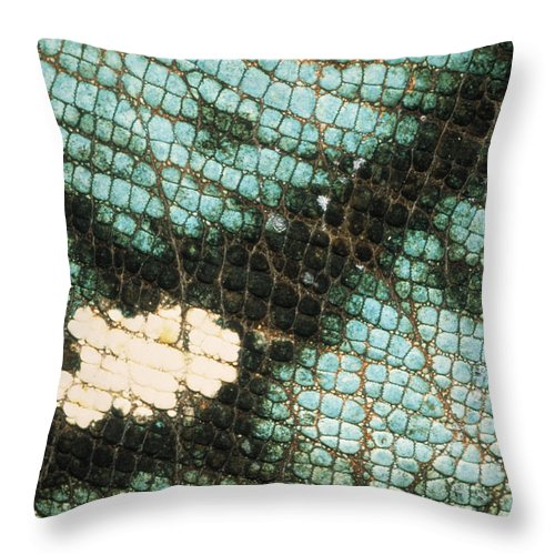 Fn Throw Pillow featuring the photograph Parsons Chameleon Calumma Parsonii by Ingo Arndt