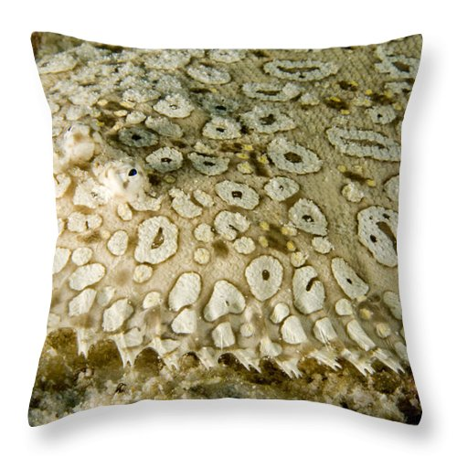 Peacock Sole Fish Throw Pillow featuring the photograph Peacock Sole On The Sea Bed by Tim Laman