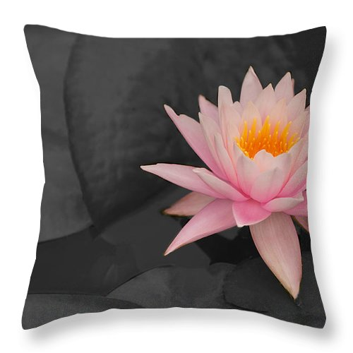 Pink Lilly Throw Pillow featuring the photograph Pink by Paul Mangold