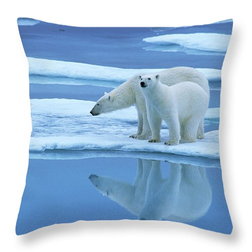 Fn Throw Pillow featuring the photograph Polar Bear Ursus Maritimus Pair On Ice by Rinie Van Meurs