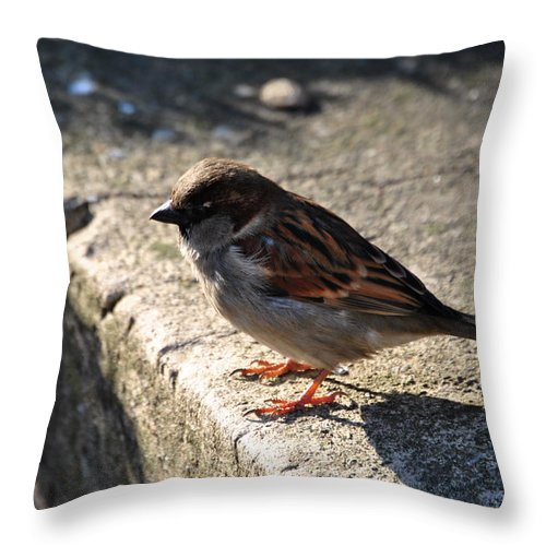 Throw Pillow featuring the photograph Pondering by Michael Frank Jr