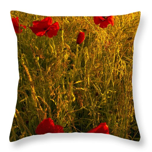 Flowres Throw Pillow featuring the photograph Poppy Field by Svetlana Sewell