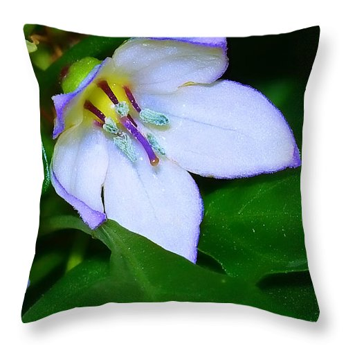Flower Throw Pillow featuring the photograph Purple Edges by Judi Bagwell