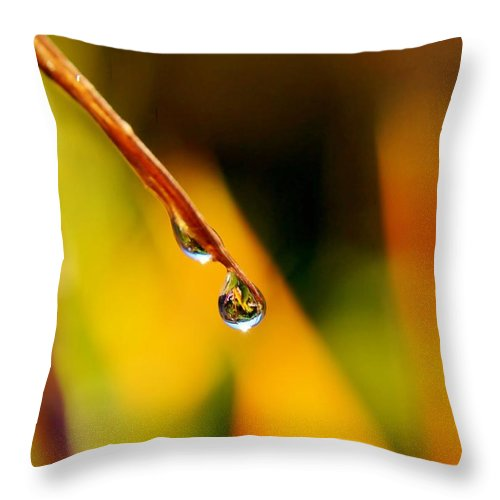 Blossom; Orange; Green; Garden; Plant; Flower; Blue; Petals; Nature; Beautiful; Sunlight; Background; Bud; Close Up; Bird Of Paradise; Stelitzia Reginae; Raindrop; Drop; Water; Reflection; Throw Pillow featuring the photograph Raindrop On Strelitzia Reginae by Werner Lehmann