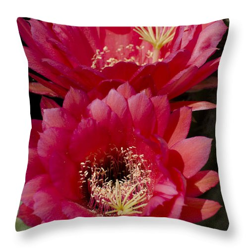 Cactus Throw Pillow featuring the photograph Red Cactus Flowers by Jim And Emily Bush