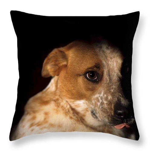 Animal Throw Pillow featuring the photograph Red Heeler Portrait by One Rude Dawg Orcutt