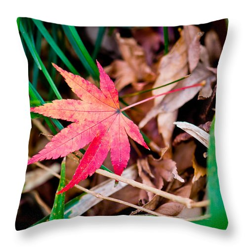 Abstract Throw Pillow featuring the photograph Red Leave Up On Grass by U Schade
