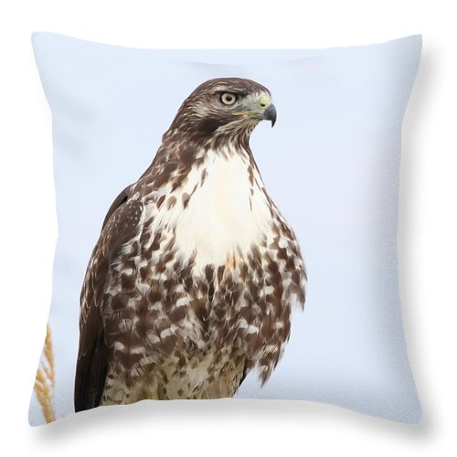 Hawk Throw Pillow featuring the photograph Red-tail Hawk by Angie Vogel