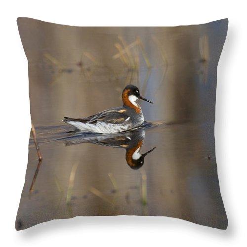 Alaska Throw Pillow featuring the photograph Rednecked Phalarope by Doug Lloyd