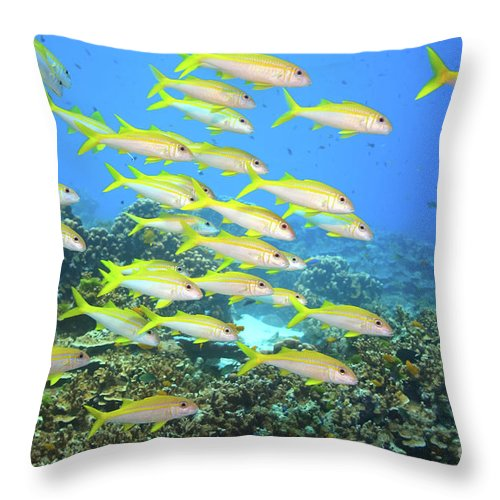 Fish Throw Pillow featuring the photograph School Of Yellowfin Goatfish by MotHaiBaPhoto Prints