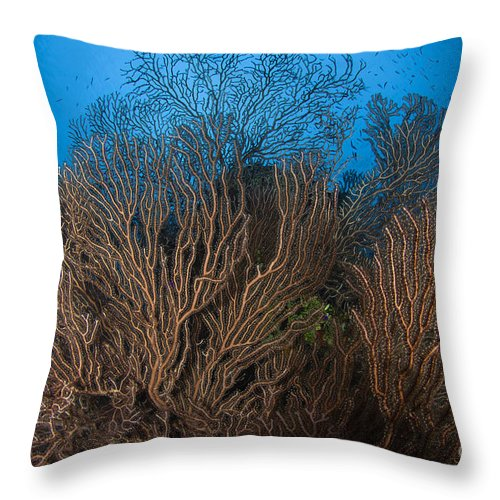 Sea Life Throw Pillow featuring the photograph Sea Fan Seascape, Belize by Todd Winner