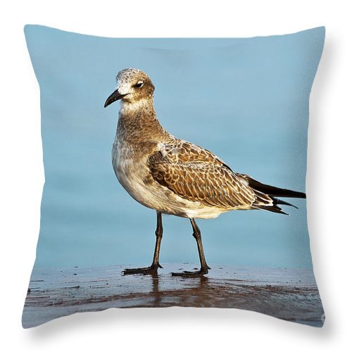 Animal Throw Pillow featuring the photograph Seagull by John Greim