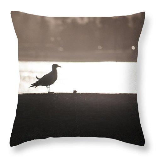 Gull Throw Pillow featuring the photograph Seagull by Ralf Kaiser