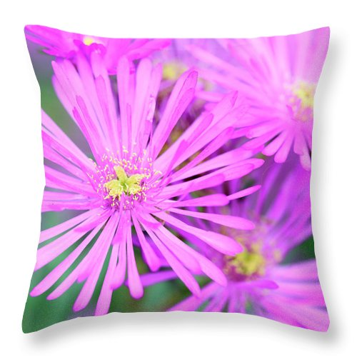 Showy Vygie Throw Pillow featuring the photograph Showy Vygie by Neil Overy
