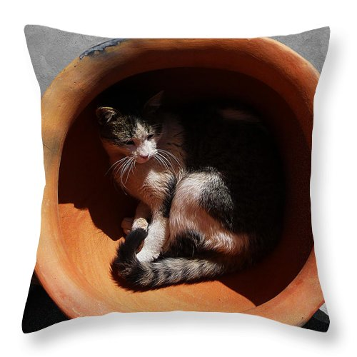 Cat Throw Pillow featuring the photograph Siesta 3 by Xueling Zou