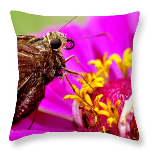 Silver-spotted Skipper Throw Pillow featuring the photograph Skipper On Zinnia by Thomas R Fletcher