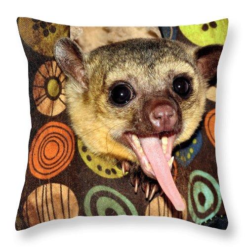 Kinkajou Throw Pillow featuring the photograph Sleepy by Art Dingo