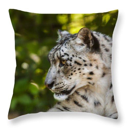 Dawn Oconnor Dawnoconnorphotos@gmail.com Throw Pillow featuring the photograph Snow Leopard by Dawn OConnor