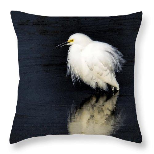 Snowy Egret Throw Pillow featuring the photograph Snowy Egret by Saija Lehtonen