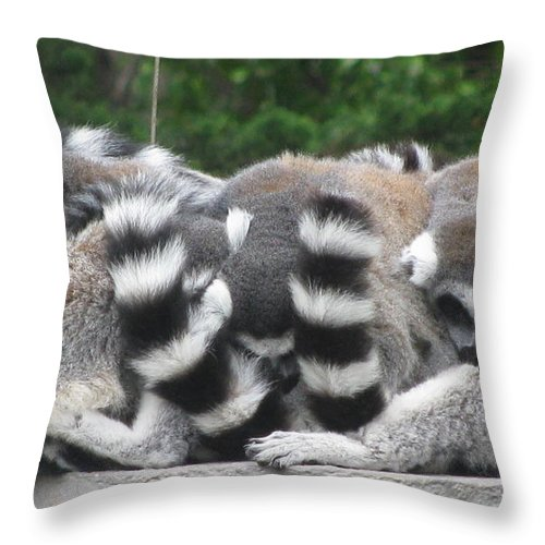 Animals Throw Pillow featuring the photograph Snuggling by Tina Marie