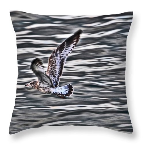 Throw Pillow featuring the photograph Soaring Gull by Michael Frank Jr