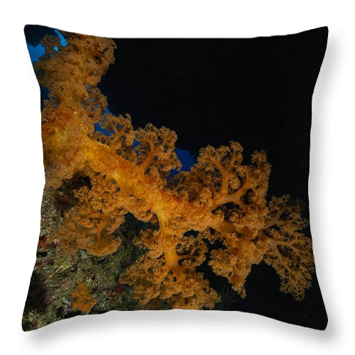 Sea Life Throw Pillow featuring the photograph Soft Coral Seascape, Fiji by Todd Winner