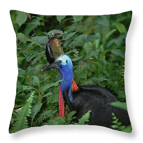 Mp Throw Pillow featuring the photograph Southern Cassowary Casuarius Casuarius by Konrad Wothe