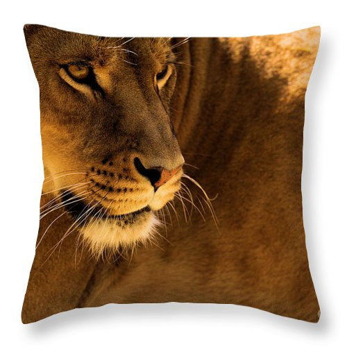 Lion Throw Pillow featuring the photograph Strike A Pose by Adam Jewell