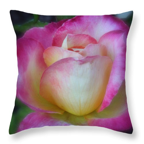 Rose Throw Pillow featuring the photograph Sweet Scent Of A Rose by Jane Coenen