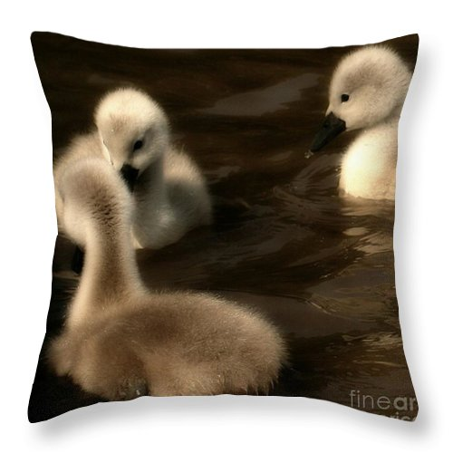 Cygnets Throw Pillow featuring the photograph They Called You An Ugly What by Isabella F Abbie Shores FRSA