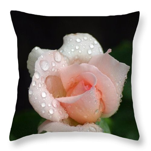 Roses Throw Pillow featuring the photograph Thinking Of You by Living Color Photography Lorraine Lynch